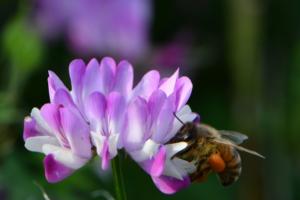 蜂蜜について