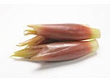 ミョウガ|夏が旬の野菜