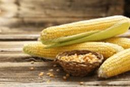 とうもろこしの栄養と簡単レシピ 夏の体力維持に効果的