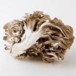 秋が旬の香り豊かな舞茸レシピ