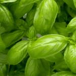 バジルレシピ|オイルを使って栄養を効率的に摂ろう!