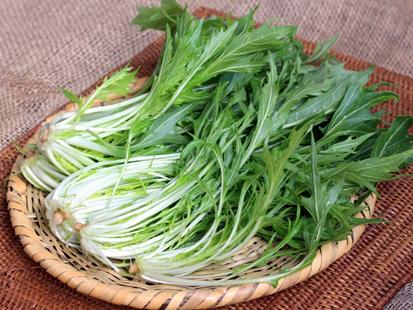 水菜|意外と栄養満点?保存方法は?