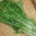 京野菜 水菜の栄養 美味しいおすすめレシピもご紹介