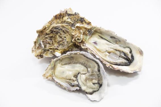 牡蠣|疲労回復や体力増強に効果的