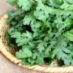 春菊は栄養満点!独特の香りには胃腸の調子を整える効果も!