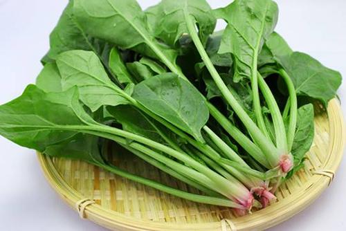 小松菜とほうれん草の栄養の違いは?見分け方もご紹介